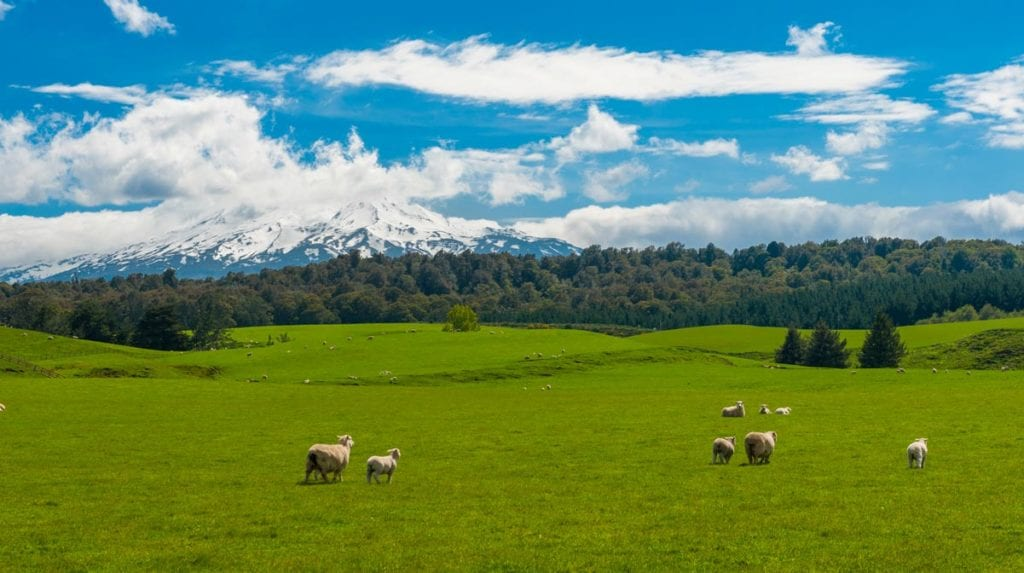 King Country Pet Food New Zealand